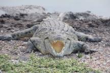 Tau Game Lodge Croc