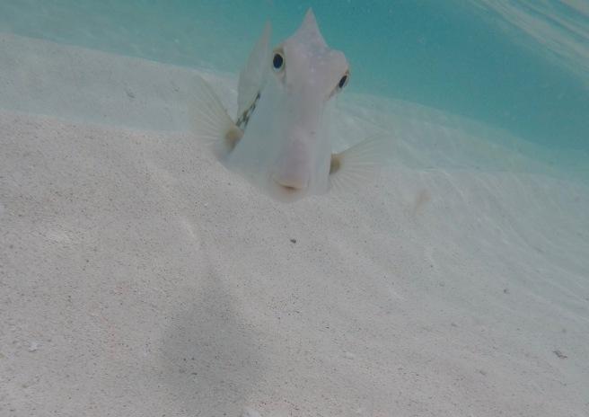 Hi Mr. Fish, Gibbs Cay