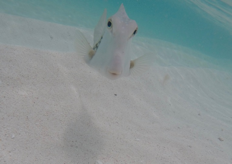 Hi Mr. Fish, Gibbs Cay