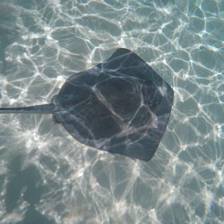 Stingray Gibbs Cay