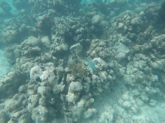 Fish in the Reef
