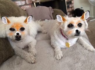 Pippin and Chloe on SnapChat