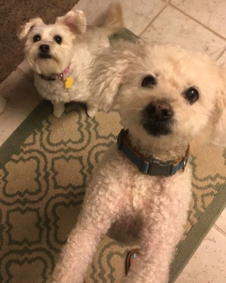 Chloe and Pippin