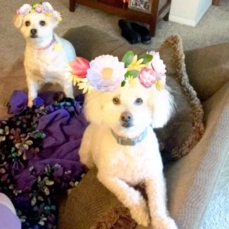 SnapChat does Chloe and Pippin