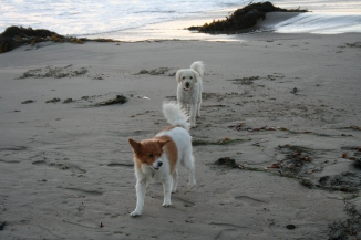 Pip and Sydney Playing on the Beach