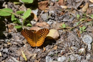 Butterfly at Babbling Brook