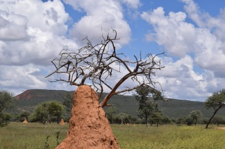 Giant Ant Hill