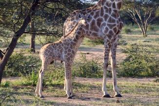 Baby Loving Mom