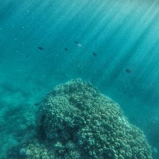 Snorkeling in Lanai