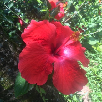 Garden of Eden, Maui