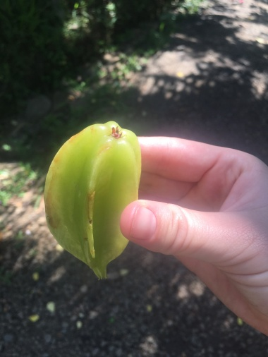 Star Fruit, Garden of Eden