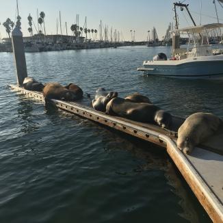 Resting Sea Lions